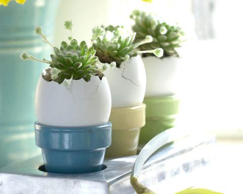 Пасхальный сад в яичной скорлупе