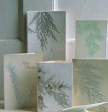 Вечнозеленые открытки